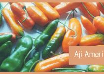 Peperoncino Aji Amarillo