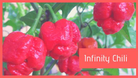 Infinity Chili peperoncino