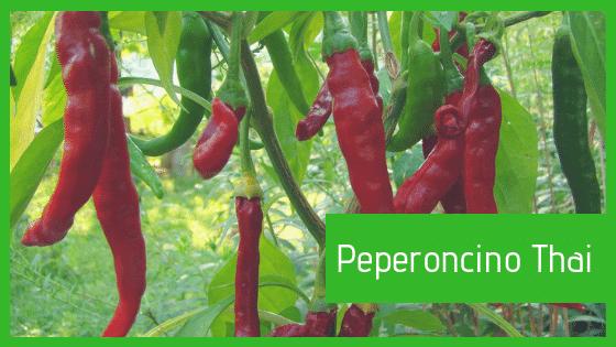 Coltivare peperoncino thailandese, conservare peperoncino thailandese, mangiare peperoncino thailandese