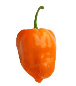 Semi Habanero orange