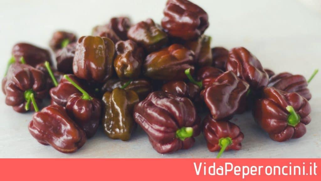 peperoncini Habanero Chocolate, proprietà Habanero Chocolate